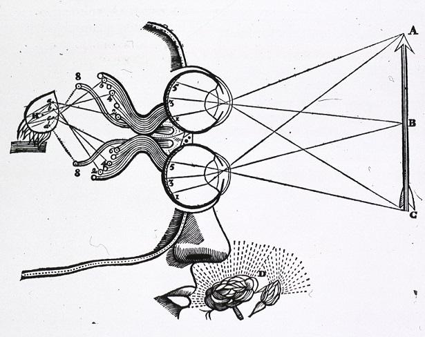 medical-diagram-descartes-vision-and-visual-perception